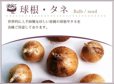 bulb,seed